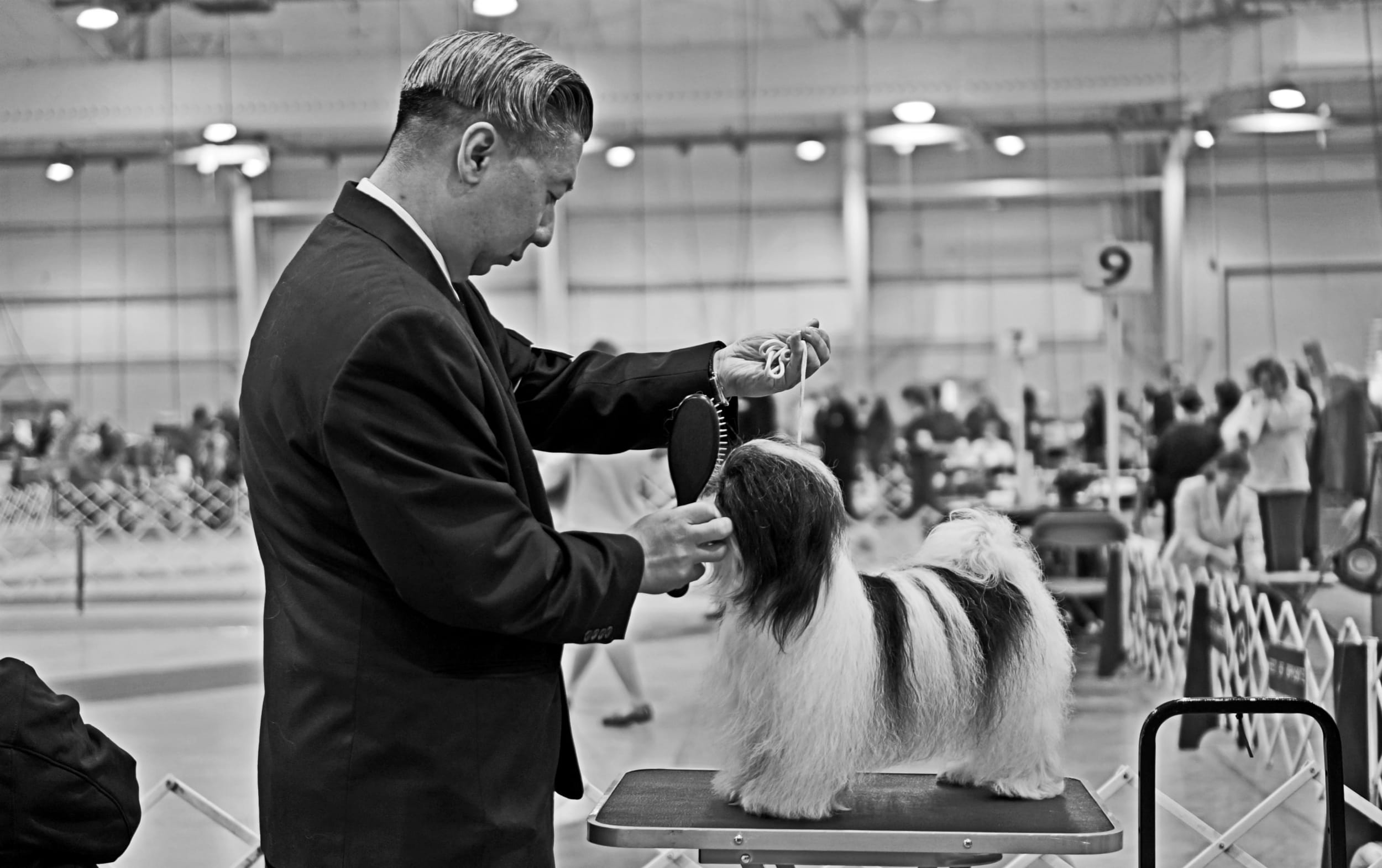 Dog Show/ThePrimp