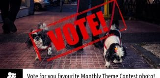 """Vote for """"Pets and their people"""""""
