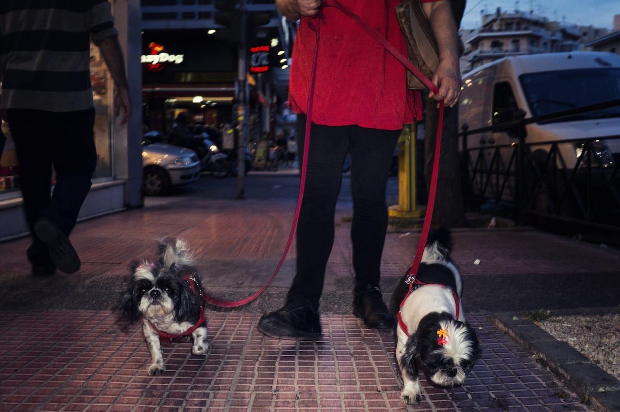 "The ""Dog Walker"" by Spyros Papaspyropoulos"