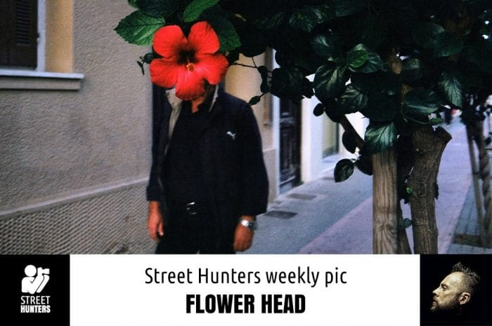 Weekly Pic - Flower Head by Spyros Papaspyropoulos