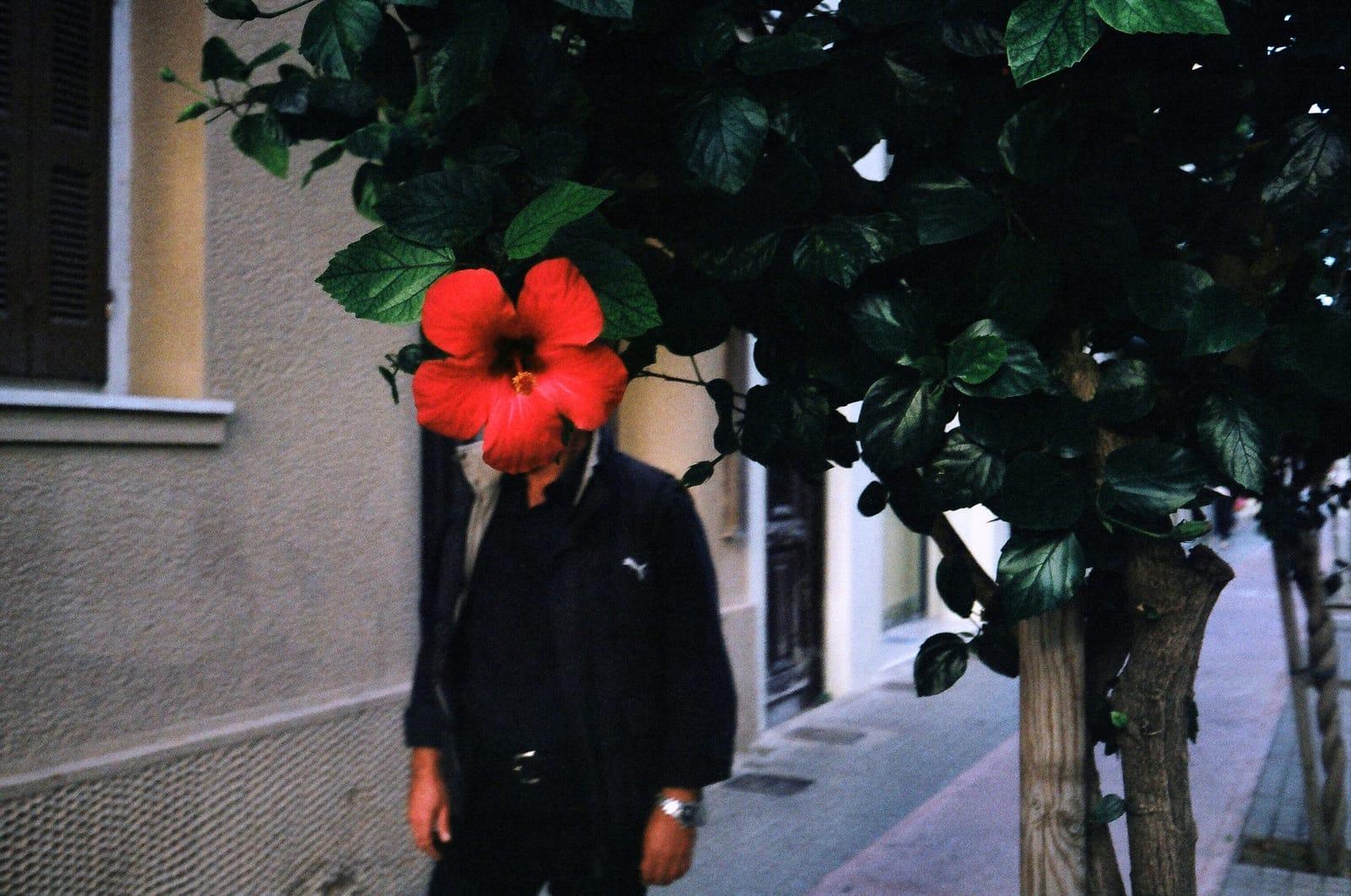 Flower Head by Spyros Papaspyropoulos
