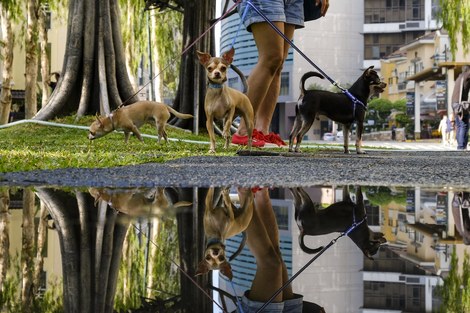 """""""Rat's Eye View"""" Street Photograph by Kevin Icabales"""